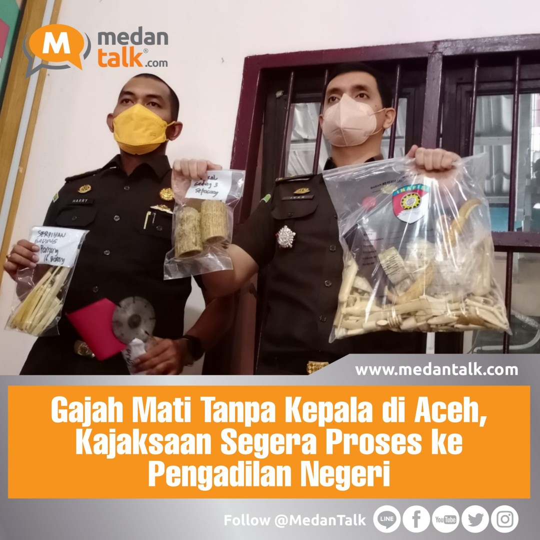 "Gajah Mati Tanpa Kepala di Aceh, Kajaksaan Segera Proses ke Pengadilan Negeri . Kejaksaan Negeri (Kejari) Aceh Timur telah menerima pelimpahan berkas perkara 5 tersangka dan barang bukti pembunuhan gajah tanpa kepala, Selasa (5/10). Mereka akan segera memprosesnya ke tingkat pengadilan.  ""Para tersangka sudah diserahkan penyidik kepolisian. Perkara ini sudah masuk tahap dua,"" ujar Kepala Kajari Aceh Timur Semeru, melalui Kepala Seksi Pindana Umum Ivan Najjar Alavi kepada Indiespot, Minggu (10/10)  Kata Ivan proses pelengkapan berkas persidangan ke pengadilan secepat mungkin disiapkan. Saat wawancara Ivan juga menjelaskan idenitas tersangka dan identitas.  Pertama JN Warga Aceh Timur, dia bertugas mengeksekusi gajah. Lalu ada EM (41), warga Kabupaten Pidei Jaya, SN (33) warga Bogor, JF (50) warga Depok, RN (46) warga Bekasi. ""Masing-masing dari mereka berperan sebagai agend dan pembelian bagian tubuh satwa dilindungi,""ujarnya.  Kata Ivan tersangka disangkakan. Pasal 21 Ayat (2) Huruf a Undang-Undang Nomor 5 Tahun 1990 Tentang Konservasi Sumber Daya Alam Hayati  Maksimal hukumannya, lima tahun penjara dan denda sebesar Rp100 juta. Kasus gajah tanpa kepala ini terungkap bermula saat satu gajah sumatera jantan ditemukan mati tanpa kepala di area PT Bumi Flora di Desa Jambo Reuhat, Banda Alam, Aceh Timur, Minggu (11/7) Dari penyelidikan, polisi menangkap lima pelaku. . Sumber : indiespot.id"