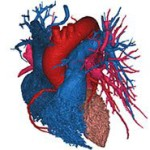 heart_segmentation_300x185