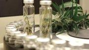Marijuana is used to treat epilepsy
