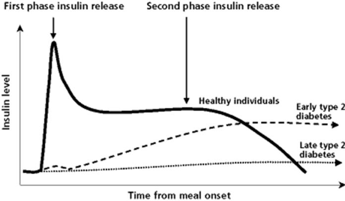 Phases-of-Insulin secretion