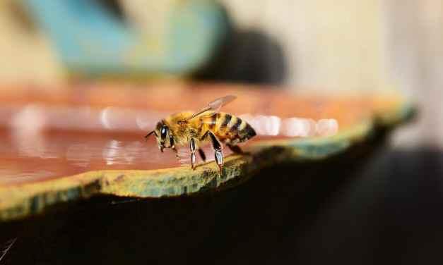 Utiliser le miel dilué dans l'eau en tant que collyre pour l'oreille