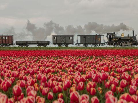 Bello door de tulpenvelden Foto Gerda Holla