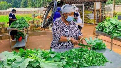 Photo of Zimbabwe's First Lady prepares vegetables for the poor