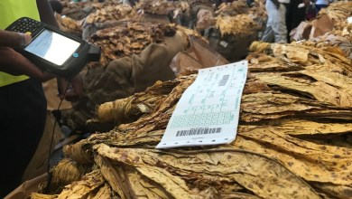 Photo of Zimbabwe tobacco sales rakes in US$77.11 mln