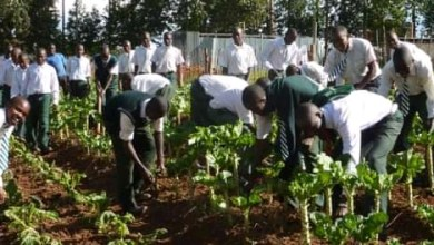 Photo of Include youths in driving modern farming – Buhari to Agencies