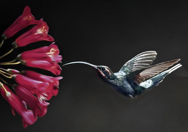 colibri-google-mediacademie