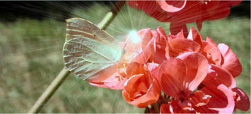 Farfalla Laser