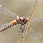 Una domenica tra le libellule nel Beigua Geopark