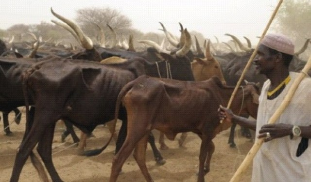 Must Read: Fulani Herdsmen Beheads Colleague Over Loss Cow In Kebbi