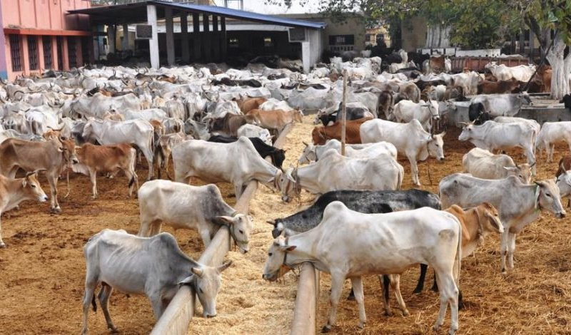 PDP cautions Fed Govt over cattle ranches
