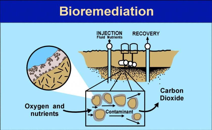 Bioremediasi pencemaran tanah