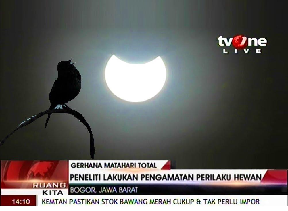 Melihat gerhana matahari di TV