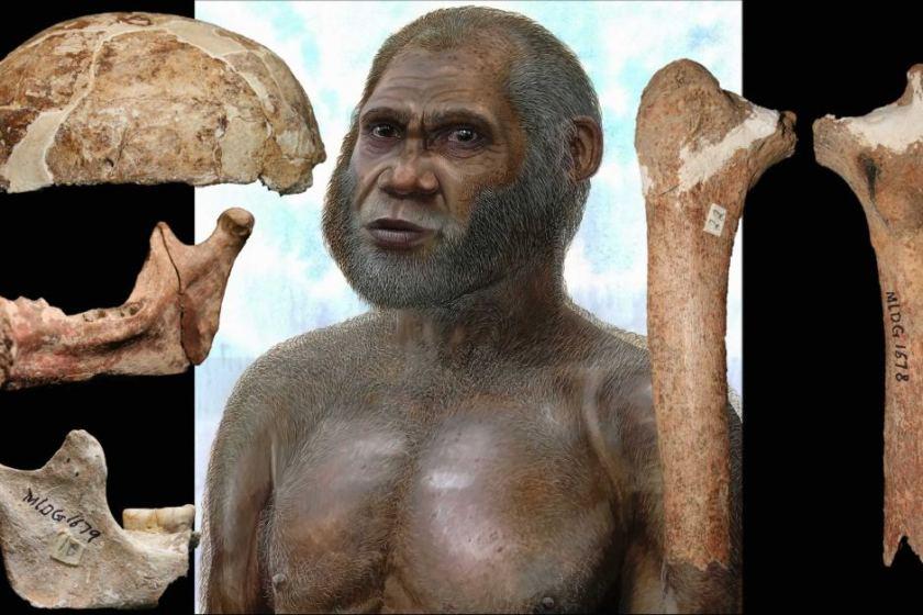 manusia purba jenis homo sapiens