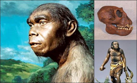 manusia purba jenis meganthropus paleojavanicus