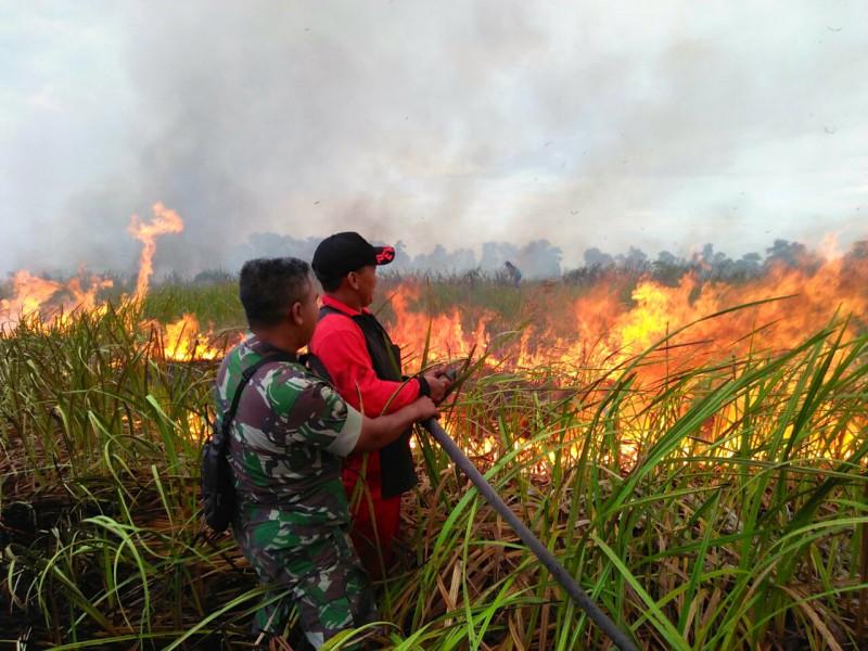 kebakaran hutan karena sengketa