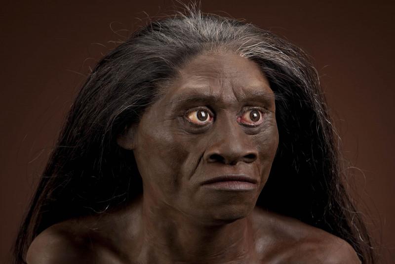 manusia purba jenis homo floresiensis