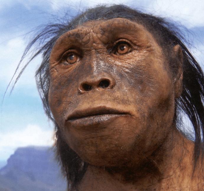 manusia purba jenis pitecanthropus robustus