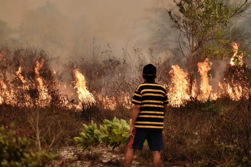 pembakaran hutan yang tak terkendali