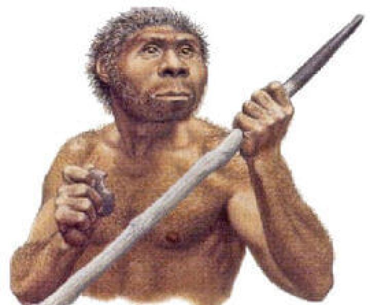 manusia purba jenis homo wajakensis
