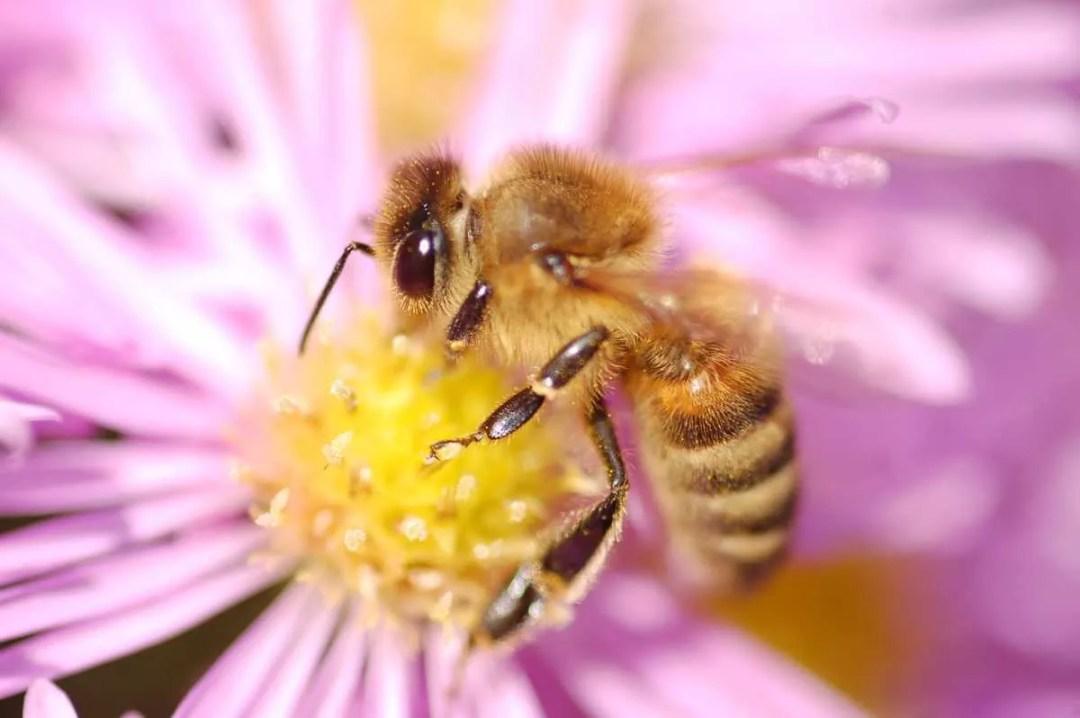 L'abeille - Portfolio de Francis Gengoux