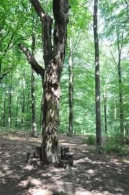 promenade_la_gileppe_arbre_mort