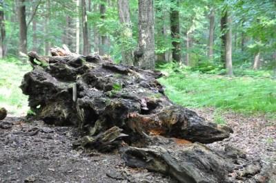 refuge de biodiversité