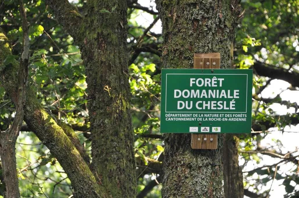 site_du_chesle_berismenil_foret_domaniale