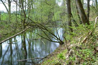 bernistap-canal-houffalize