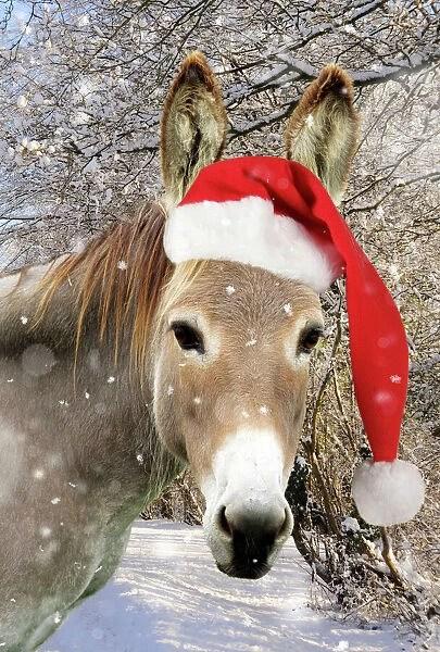 Donkey Wearing Christmas Hat In Snowy Scene JD 15167 M