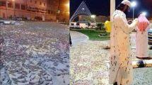 VIDEO: Fenomena Aneh, Jutaan Jangkrik Penuhi Kota Makkah