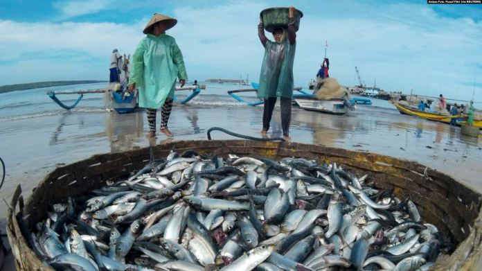 Gemar Makan Ikan dapat Mencegah Stunting pada Anak