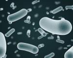 Méningite bactérienne