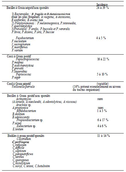 TABLE I: overview of the classification of anaerobes and frequency of isolation in pathological products of human origin