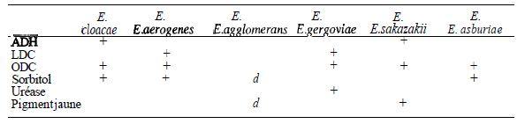 TABLEAU IV : caractères des différentes espèces d'Enterobacter