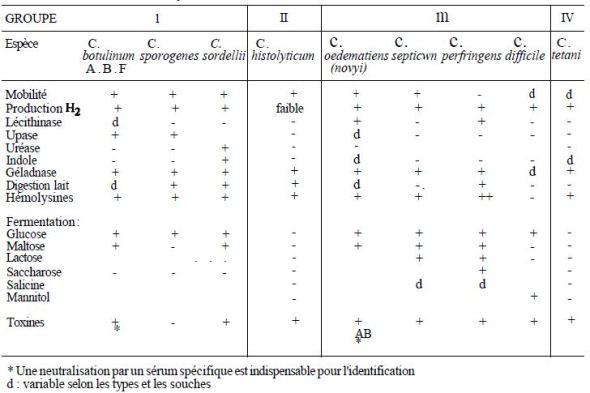TABLE I: characteristics of the main species of Clostridium