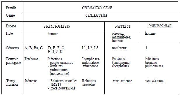 recherche chlamydiae homme)