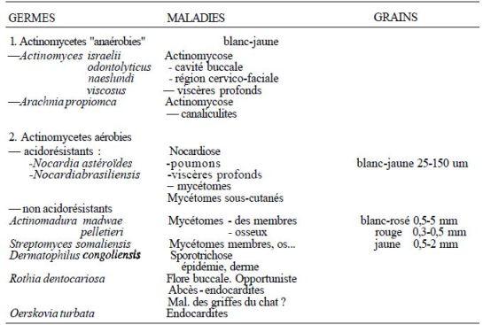 TABLEAU I : principales maladies humaines dues à des Actinomycètes
