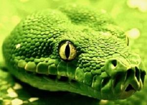 SnakeFocus