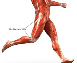 The Iliotibial Band
