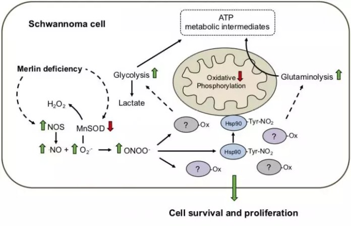 cancer cell metabolism