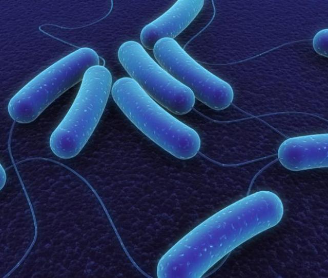 Symptoms Of E Coli Infection