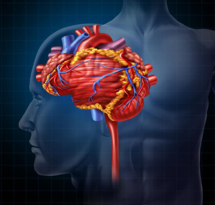 https://i2.wp.com/www.medicalnewstoday.com/content/images/articles/308/308849/heart-and-brain-merged.jpg
