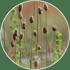 recolte-pollens