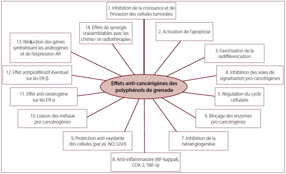 Fig. 1 – Effets anti-cancérigènes des polyphénols de grenade