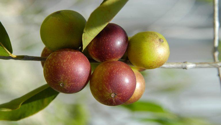 Vitamine C naturelle ou liposomale ?