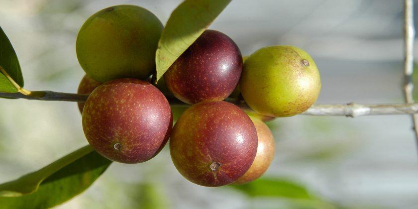 Camu Camu - Vitamine C naturelle
