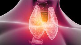 Anatomie de la thyroïde
