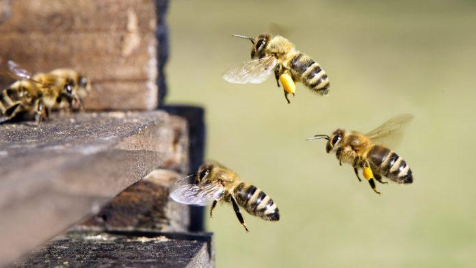 Attaque en justice contre le sabotage des tests abeilles !