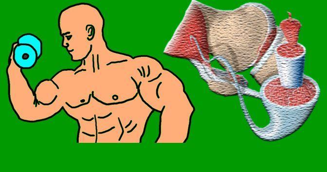 Los Tipos de Fibras Musculares y su Importancia en el Deporte