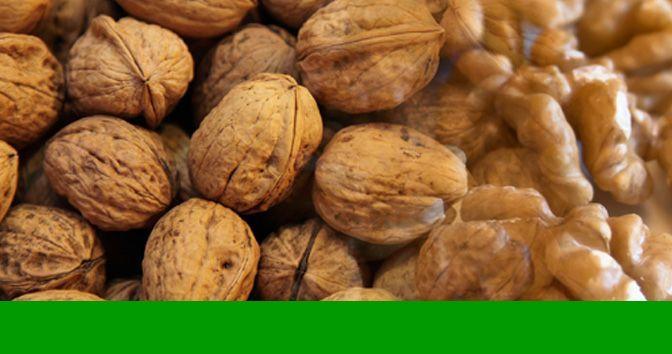 Las Nueces y sus Cualidades Nutricionales